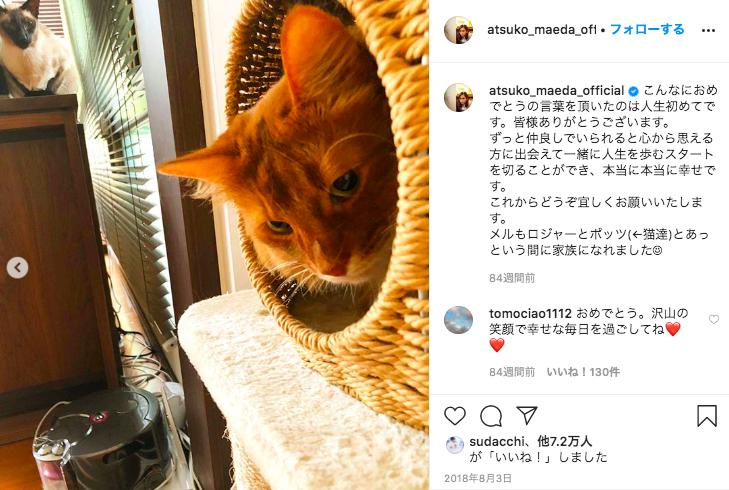 前田敦子のインスタグラム(猫の写真)