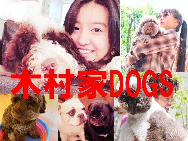 木村拓哉家の愛犬9匹【画像】大型犬&キムタク似犬の名前の由来や種類も