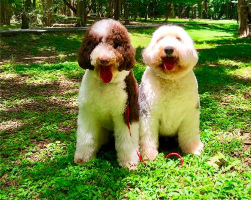 キムタク愛犬犬種
