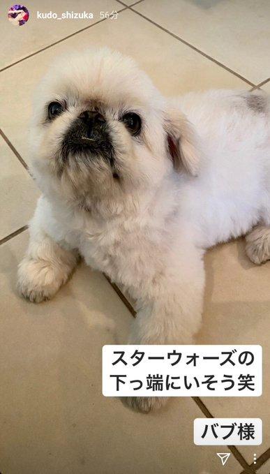 べべ 工藤静香 愛犬